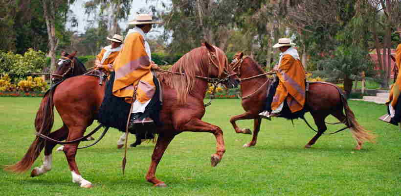 Haciendo Turismo en Lima: Conociendo al Caballo de Paso Peruano