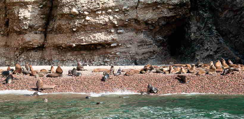 Fauna de las Islas Ballestas Ica Paracas