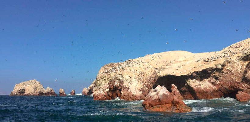 Tour a las Islas Ballestas - Paracas